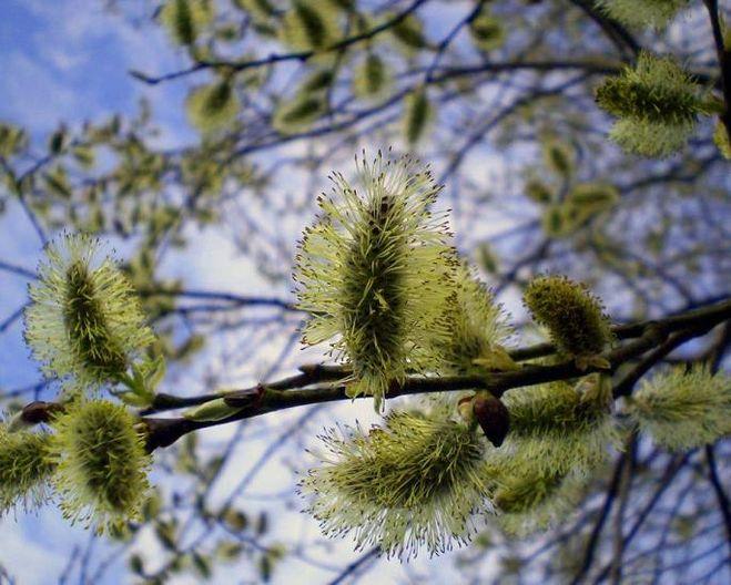Картинки весныв в неживой природе