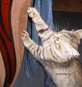 Как сделать чтобы кошка не царапала фото 164