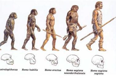 the main physical and social characteristics of the homo habilis What were some physical characteristics of homo erectus homo habilis is handy man and homo erectus is upright man they have some similarities social sciences.