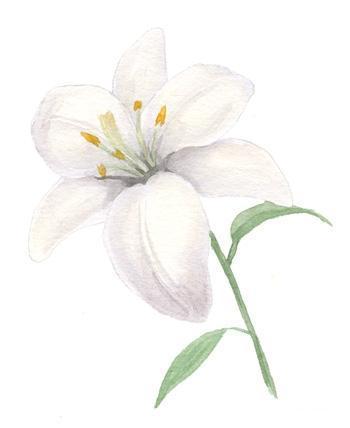 нарисовать лилию