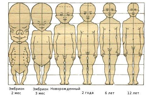 Либрусек читать возраст разных частей тела Джемете питанием