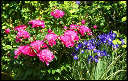 Лосьон боярышника красивые клумбы ирис пион лилии первый взгляд