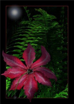 Цветок папоротника фото