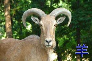 люди родившиеся в год козы под знаком рыбы