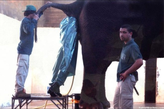 комедия голова застряла в жопе слона