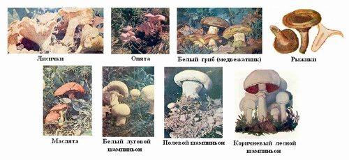 грибы и названия их фото