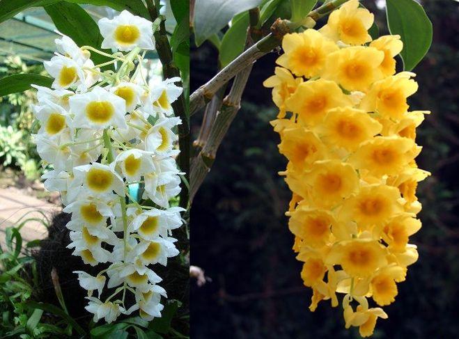 Какие виды домашних цветов
