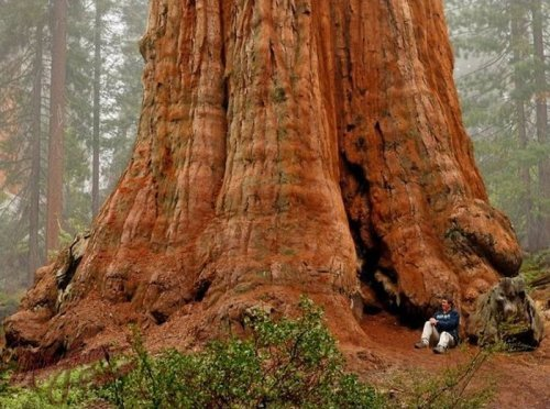 Sequoia national park photography expedition with bob killen and nppe