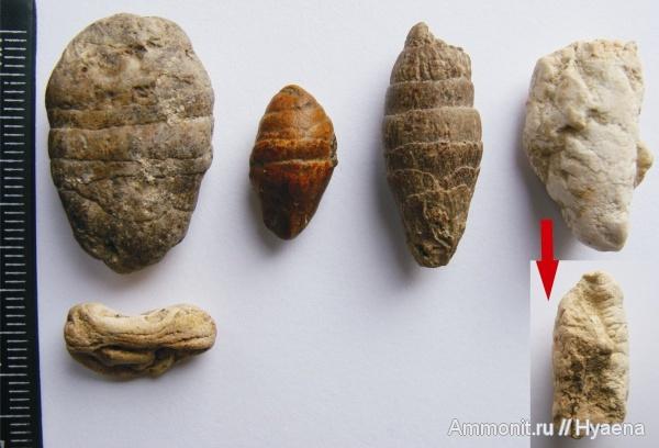 Выведение каловых камней в домашних условиях