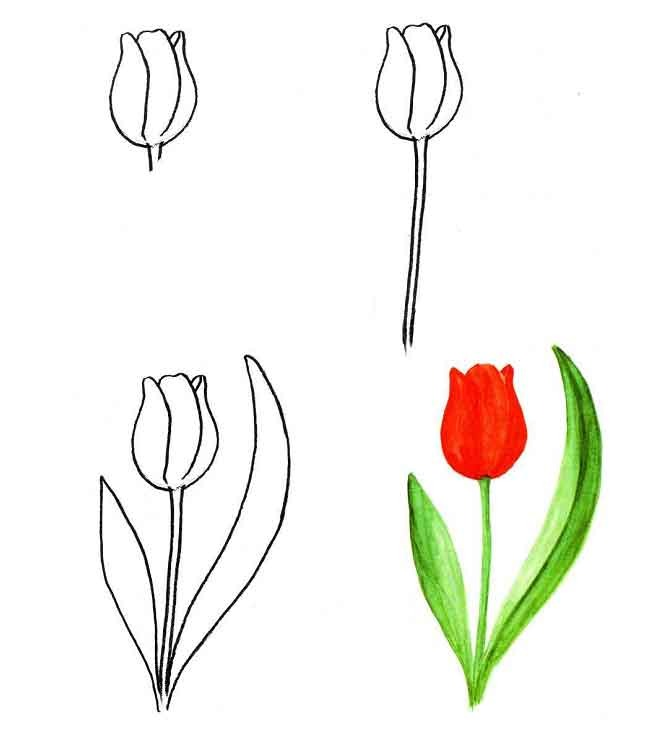 научиться рисовать цветы: