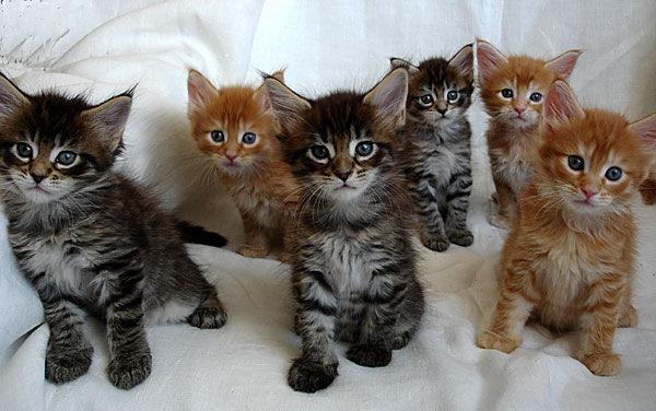сына Дарьи тайота имя для котенка приватизирована