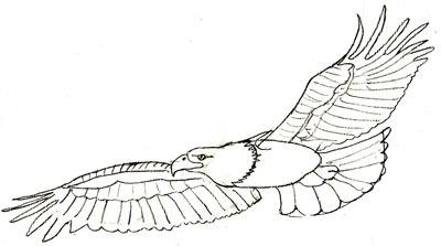 рисовать орла 5