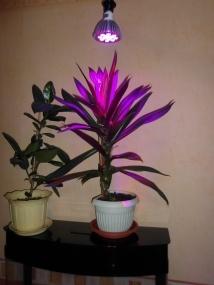 Энергосберегающие лампы для растений