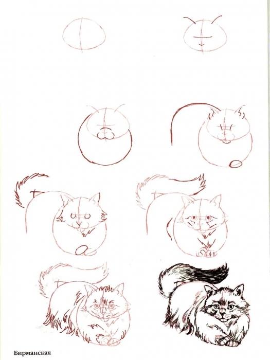 Кот нарисовать пошагово