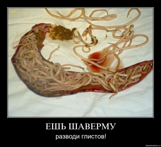 паразиты человека презентация