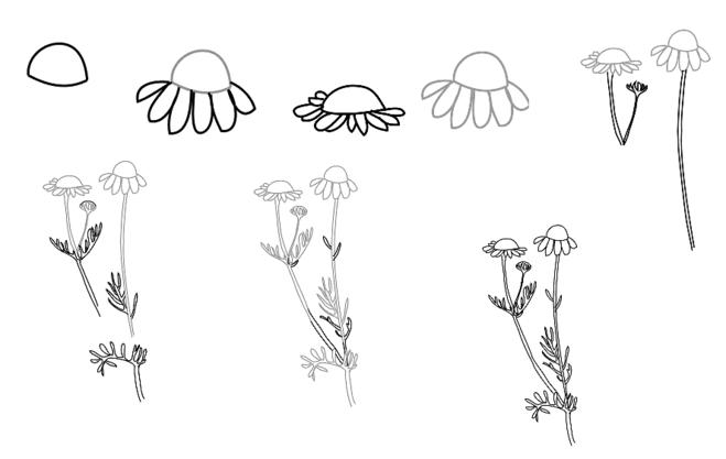 Как нарисовать ромашку