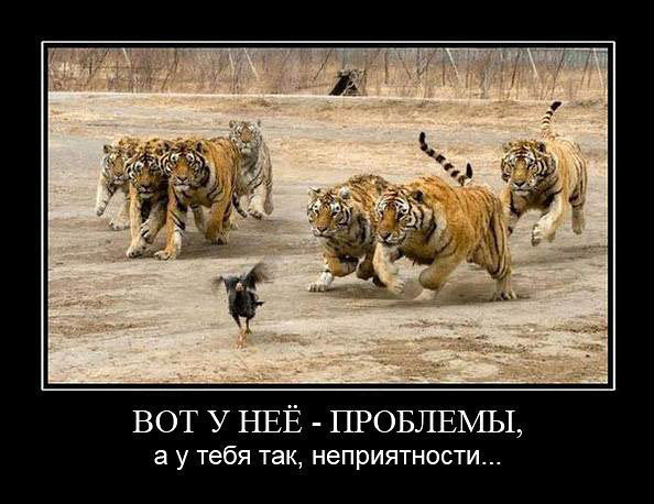 http://cdn.bolshoyvopros.ru/files/users/images/27/ff/27ffef37b5629768d2477414ac11ebb3.jpg