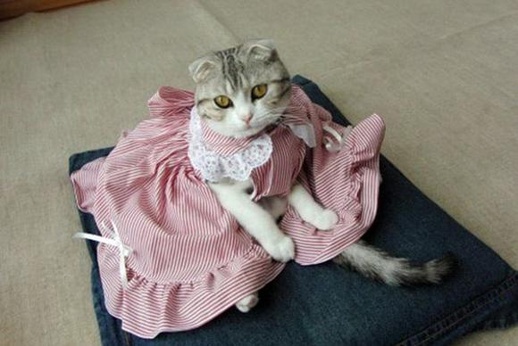Платье на кошку сшить 87