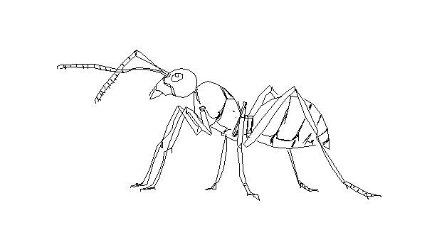 Поэтапное рисования муравья