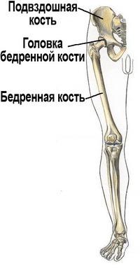 Подвздошный кость где находится