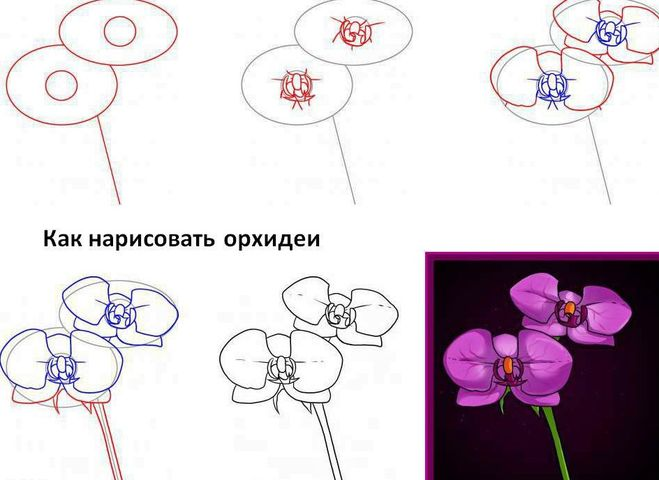 учимся рисовать карандашом поэтапно цветы:
