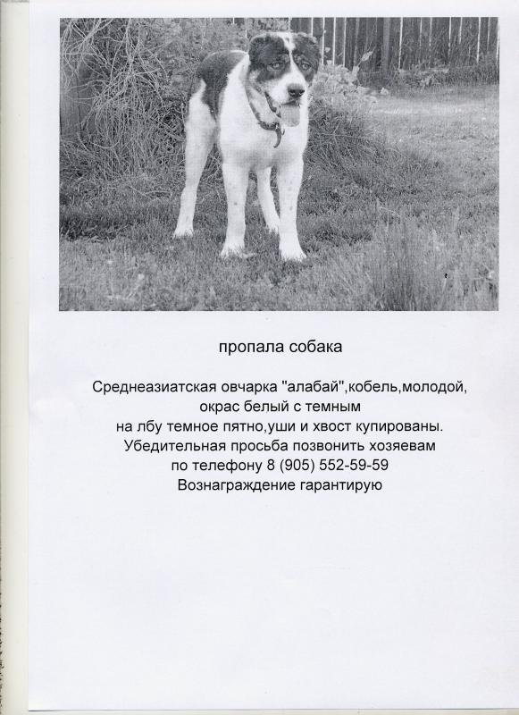 Объявление О Пропаже Телефона Образец - фото 7