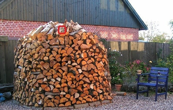 найди кота фото в дровах