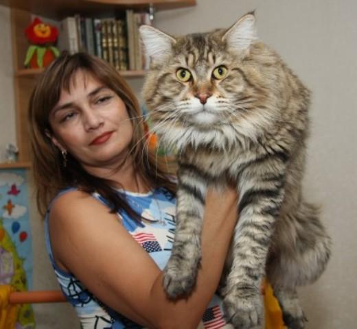 Мэйкун фото котов цена