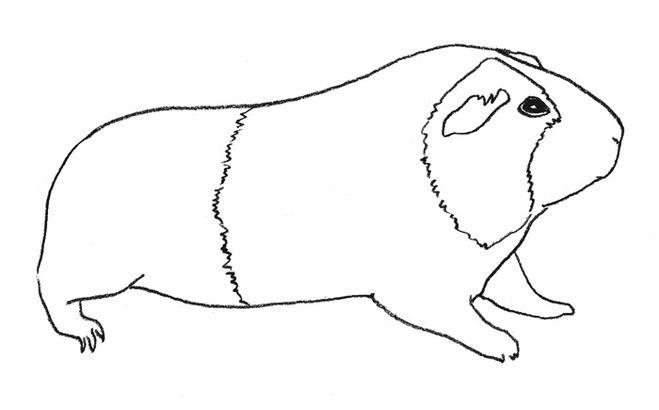 Как поэтапно нарисовать морскую свинку карандашом поэтапно 76
