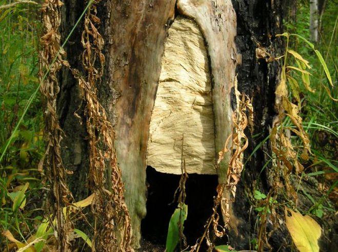 Гнездо шершней в дереве