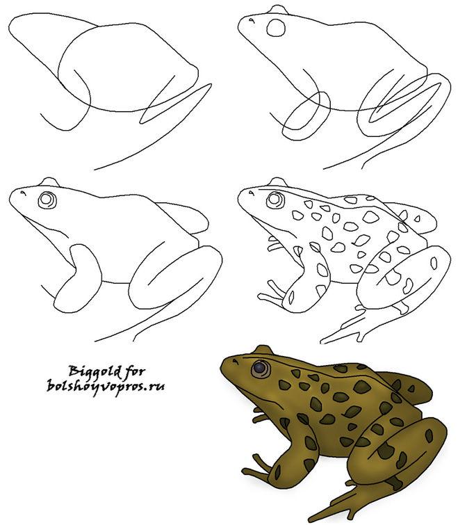 Как рисуют жабу картинка