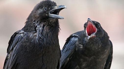 Вороны скачать песню