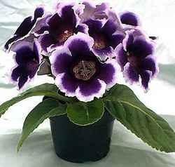 Какие цветы принято дарить на 8 марта