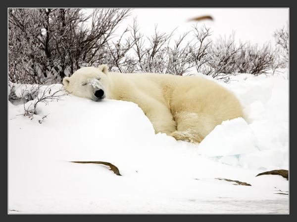 Улетели белые медведи почему же мне ночью не до сна