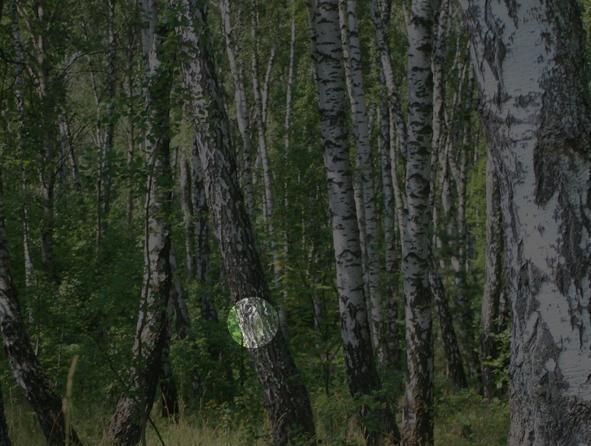 лес игра 94