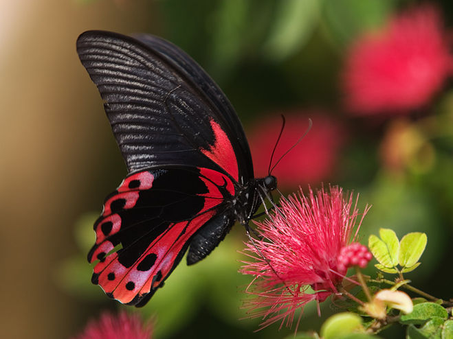 Бабочек как называется профессия