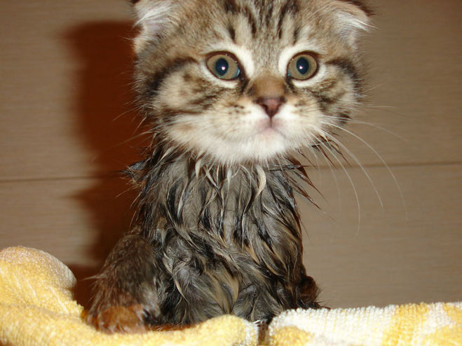 Мой том как сушить кота