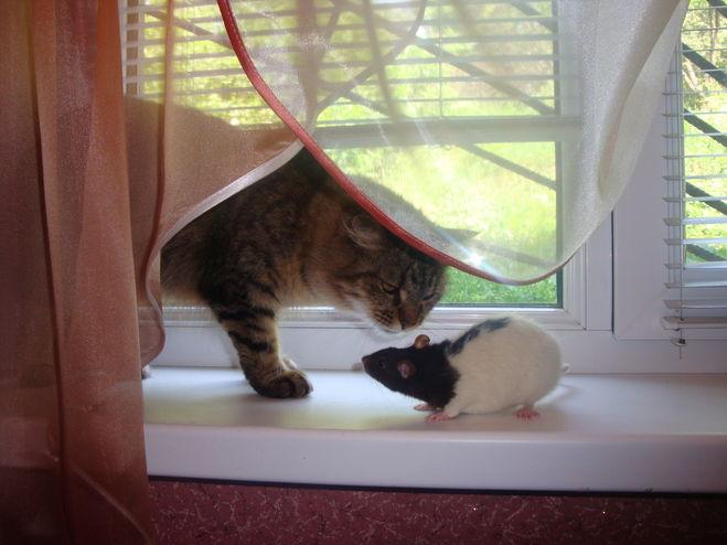 Гамак своими руками для крыс