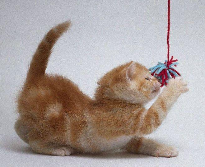 Сделать кошку мастер класс