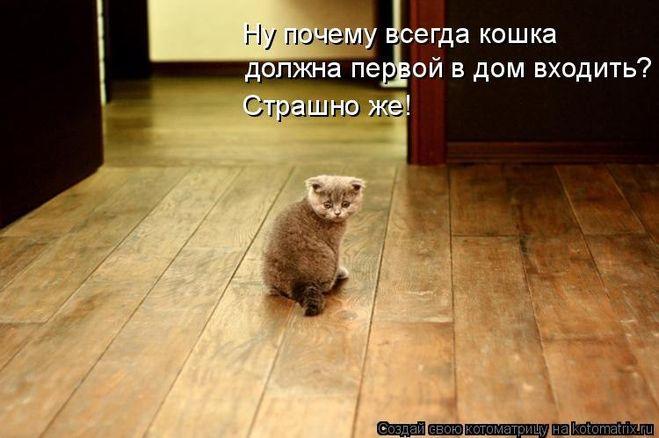 Запускать кота в новую квартиру