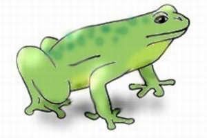 как нарисовать лягушку 4