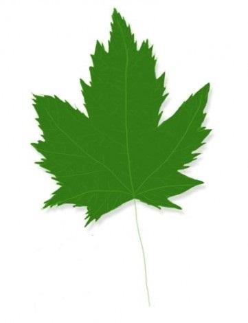 как нарисовать листья 3