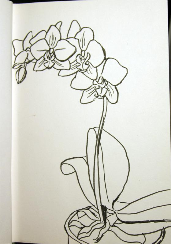 Как нарисовать орхидея
