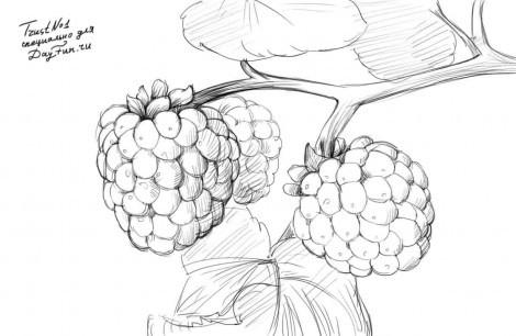 как рисовать природу карандашом поэтапно: