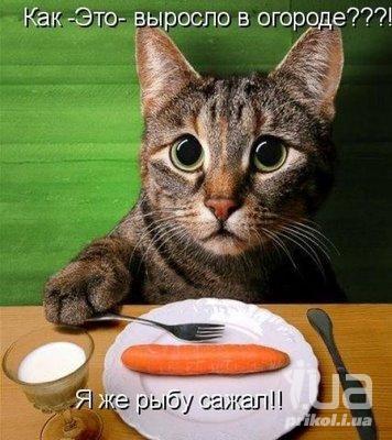 как часто давать кошкам таблетки от глистов