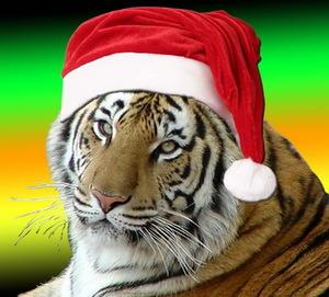 люди родившиеся в год тигра под знаком стрельца