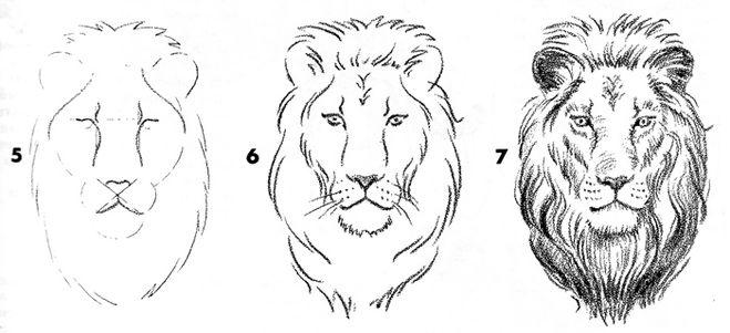 Сегодня мы узнали, как нарисовать морду льва.  Пока.  Если Вы все выполняли как в уроке, то у Вас, должен выйти такой...