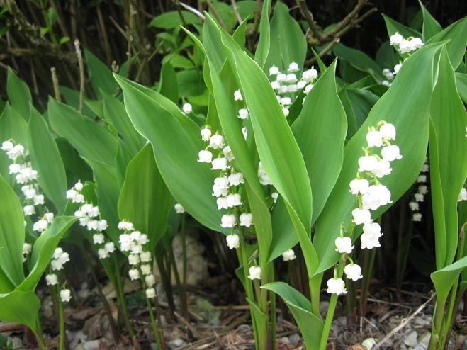 Красивые и ароматные что такое цветы