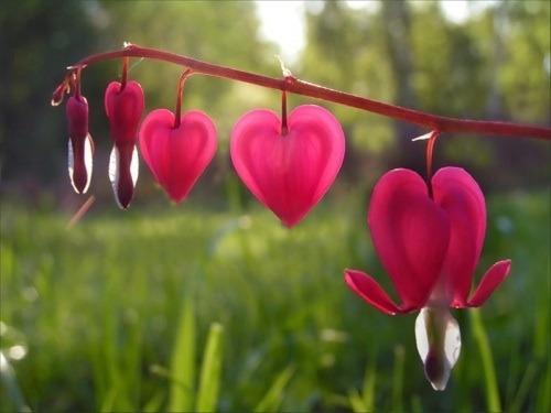 язык цветков где мое сердце беларусь, выходные