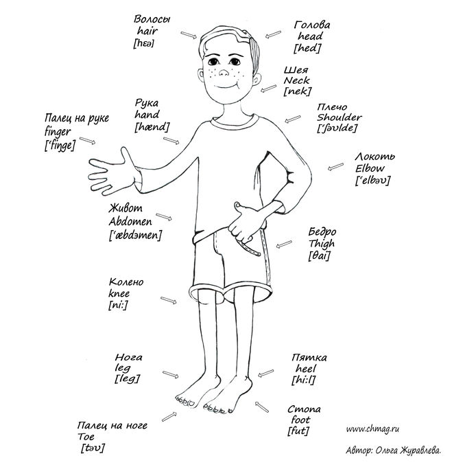 Как звучат части лица и тела на английском?